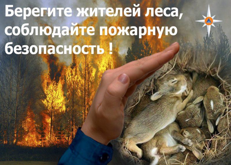 Пожарная безопасность в лесу (2)